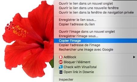 Aperçu et les fichiers image-Copier image